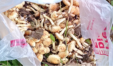 WildVegetable and Mushroom_photo